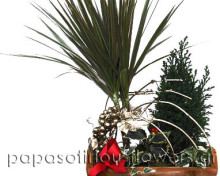 Χριστουγεννιάτικο Καλάθι φυτοσύνθεση
